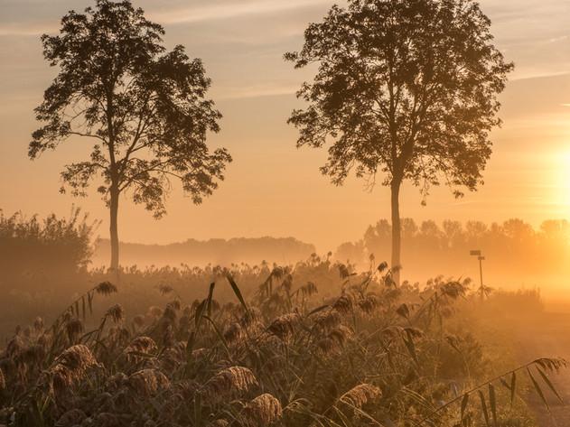 Bomen in de Betuwe in de vroege ochtend