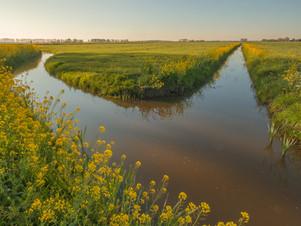 Typisch Nederlands landschap
