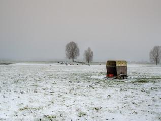 Trailer bij schapen in winters tafereel