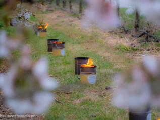 Vuurpotten tussen de fruitbomen