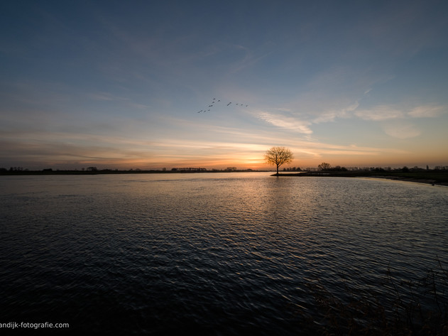 Boom alone bij rivier de Lek