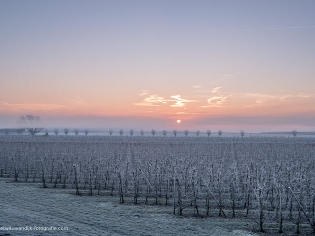 Fruitboomgaard bij zonsopkomst