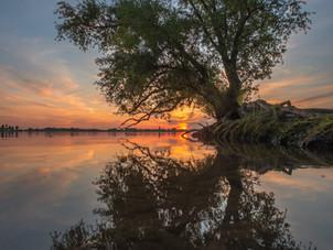 De magie van de mangrove boomwortels
