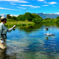 BROWN TROUT FISHING STH ISLAND.jpg