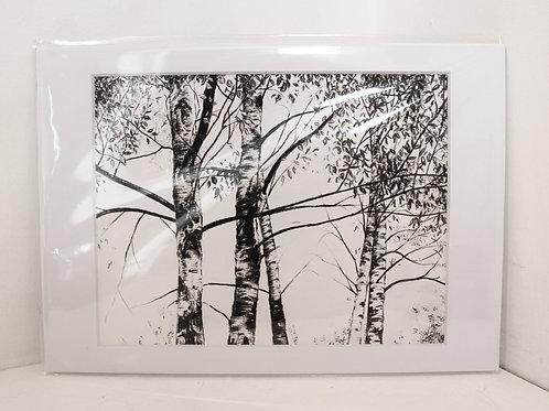 Brenchley Birch Sketch I
