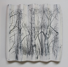 Silver Birch Tree Trunks