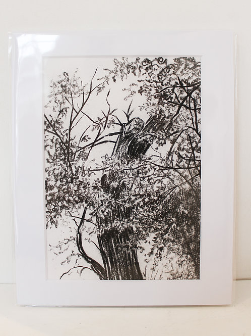 Bodiam Oak Sketch I