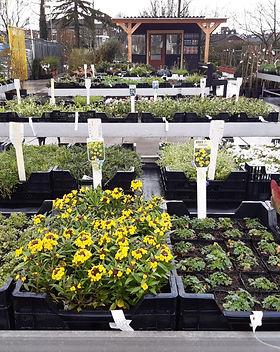 Voordeeltuin vaste planten 2020.jpeg
