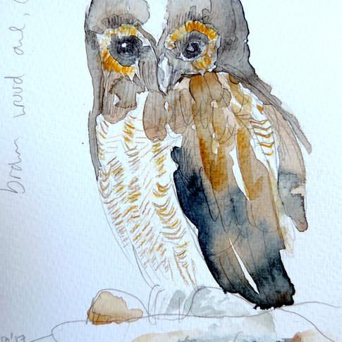Owl (brighter).jpg