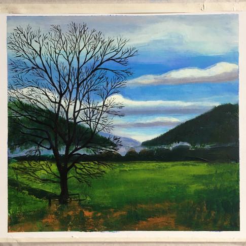 Trees & loch