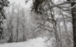 a-beautiful-winter-in-woods-3_edited.jpg