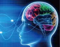 「頭蓋骨」を緩め脳への血行を良くします。