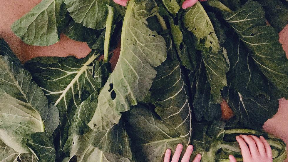"""""""Better than Kale"""" Heirloom Collards"""