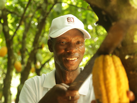 Part 1: From Cacao Beans to Chocolate