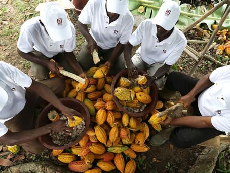 Part 4: Choosing the Right Chocolate - Taste Profile & Cocoa Origin