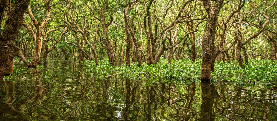 Environment Protection By Planting Mangrove Forests In Indonesia. Sustainability Project In Malta.