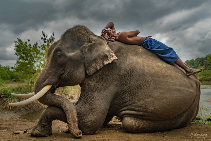Elephant Camp. Chiang Mai - Thailand, 2017