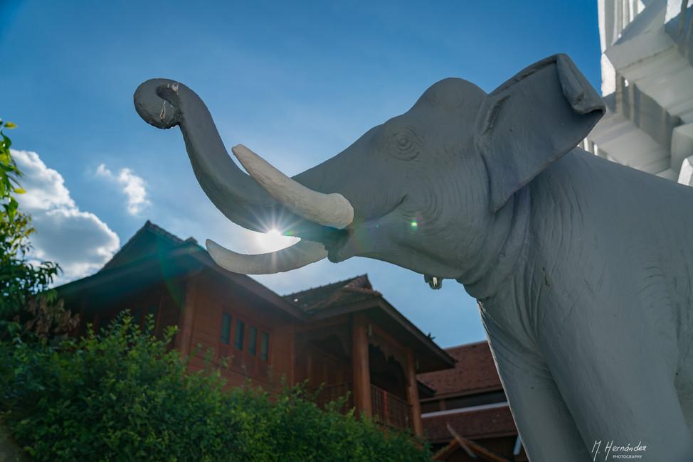 Wat Duang Dee. Chiang Mai - Thailand.