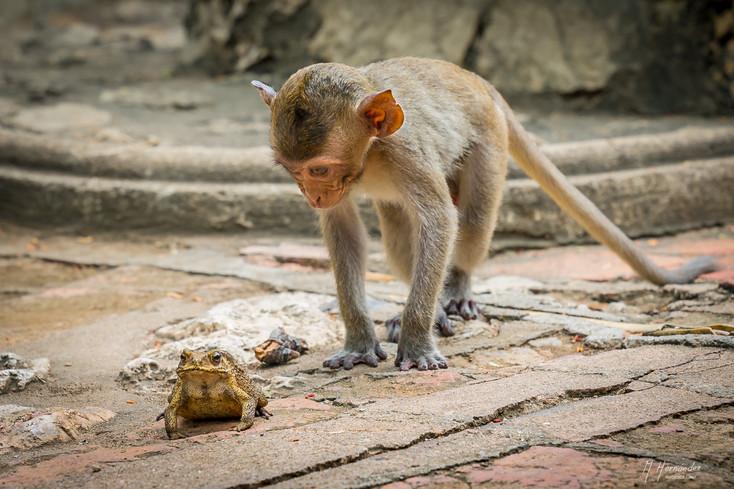 Little Monkey and Frog.