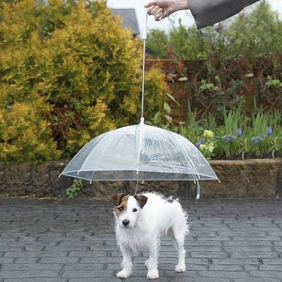 Keep your precious pooch dry .