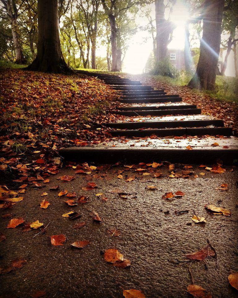 Autumn Backhouse Park Sunderland