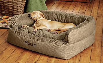 Comfort for the pooch