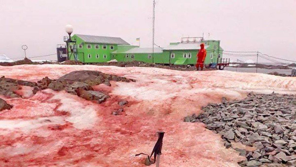 nieve con sangre en la Antártida