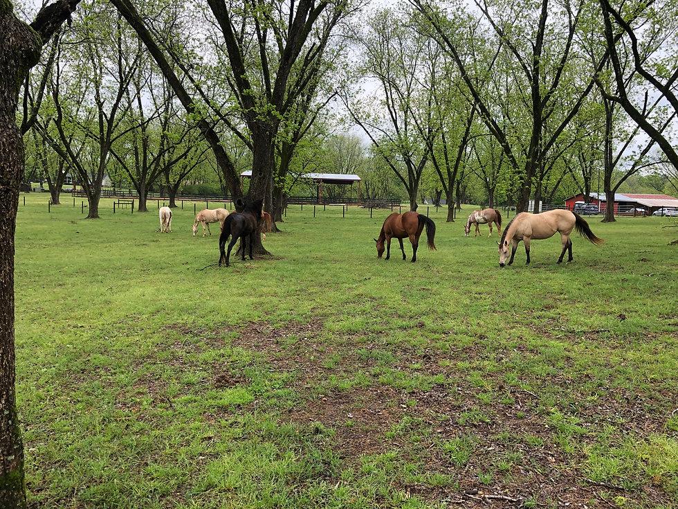 Meadow Run Farm, Griffin, GA