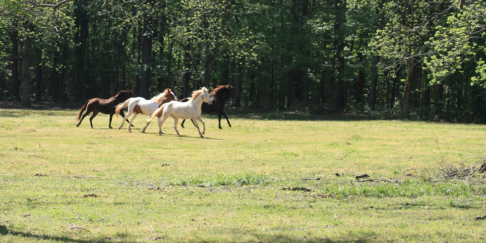 Women in Transition Equine Assisted Coaching and Ecotherapy Workshop