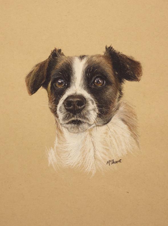 """Terrier - Pastel 11"""" x 14"""""""