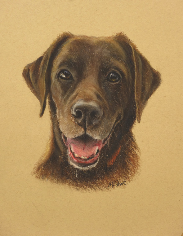 "Brown Labrador Pastel 11"" x 14"""