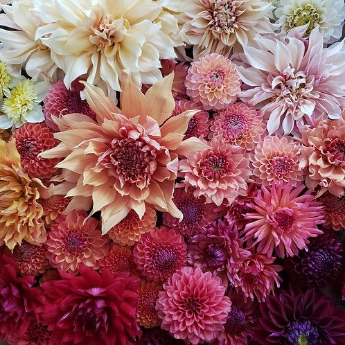 Mixed Dahlia Bunch