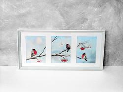 Снегирь, купить акварельную картину