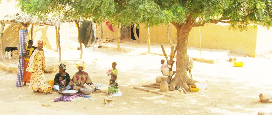 Neem-Tree-in-African-Vilage1