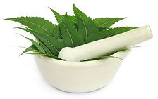 123286000-medicinal-neem-leaves-in-a-mor