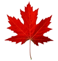 Maple Leaf small copy.png