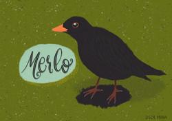 Carlo the Merlo