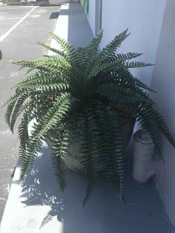 outdoor artificial plants 1377.JPG