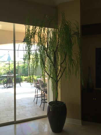 Silk Trees 0620.JPG