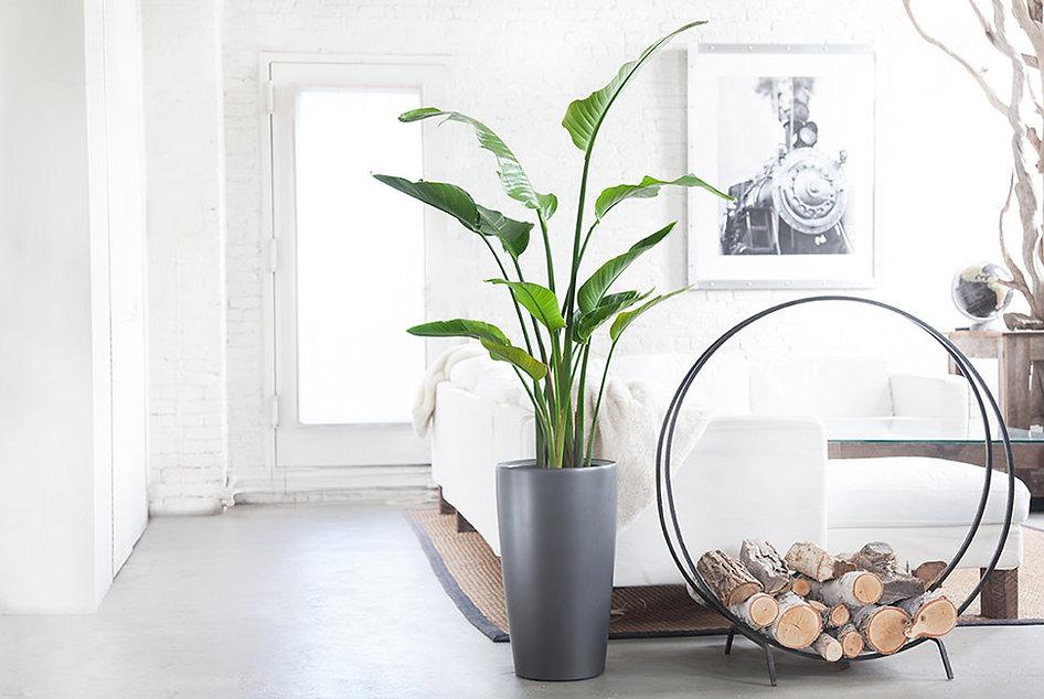 Florist Designer - Denver CO