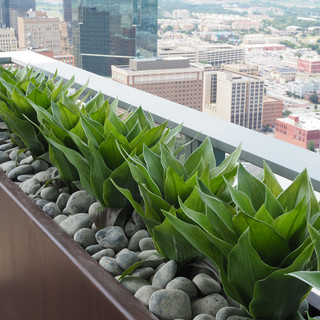 Outdoor Silk Plants - Denver CO