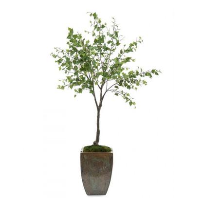 Birch Tree.JPG
