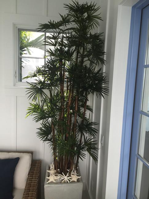 Silk Trees 0473.JPG