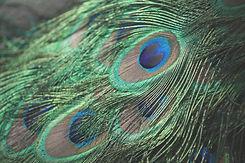 Jearuh Numerologie Blog Zürich.jpg