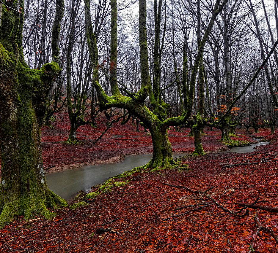 Spain_Forests_Hayedo_de_488198.jpg