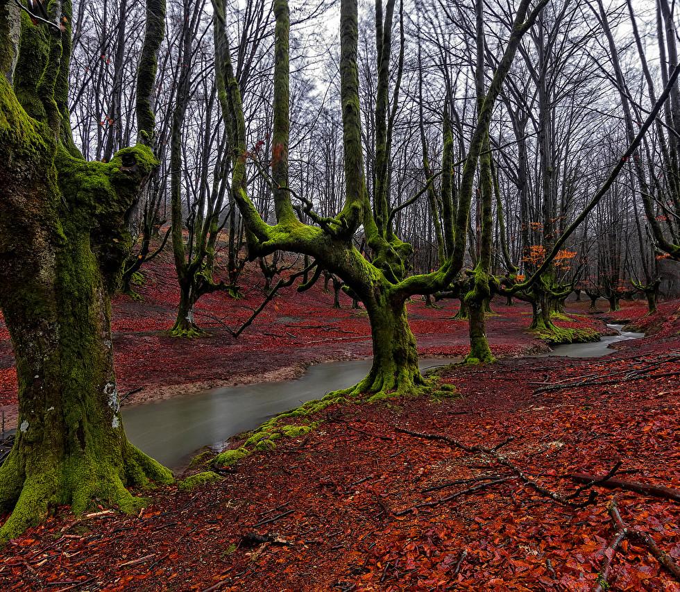 Spain_Forests_Hayedo_de_488198.jpg