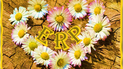 I Love My ERP, I Love My ERP NOT!