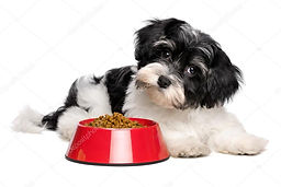 Food-Dog-RedBowl-BWdog.jpg
