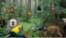 Amazonia-detalhes1.jpg