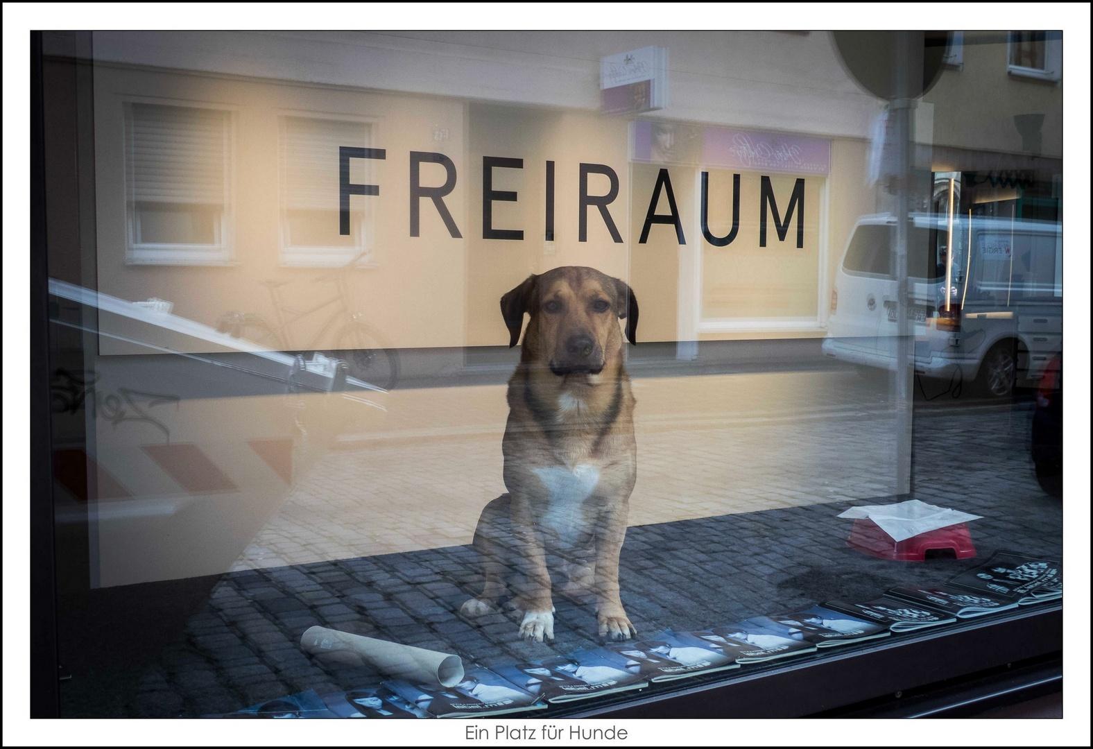 Ein_Platz_für_Hunde
